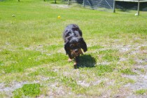 banksia-park-puppies-panky-5-of-25