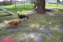 banksia-park-puppies-patricia-10-of-39
