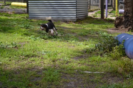 banksia-park-puppies-patricia-13-of-39
