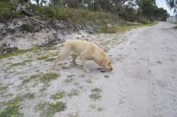 banksia-park-puppies-raspberri-2-of-11