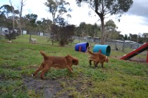 banksia-park-puppies-bunny-8-of-19