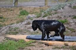 Banksia Park Puppies Jodel - 1 of 27 (20)