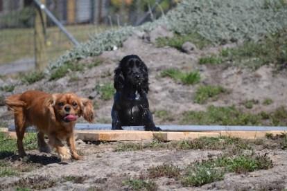 Banksia Park Puppies Jodel - 1 of 27 (25)