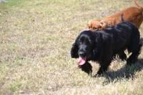 Banksia Park Puppies Jodel - 1 of 27 (5)