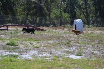 Banksia Park Puppies Jodel - 1 of 27 (9)