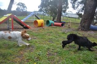 banksia-park-puppies-jodel-21-of-31