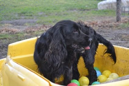 banksia-park-puppies-jodel-23-of-31