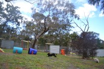 banksia-park-puppies-jodel-4-of-31