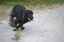 banksia-park-puppies-julia-josepha-26-of-39