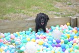 banksia-park-puppies-julia-josepha-3-of-39
