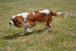 patch-banksia-park-puppies-4-of-17