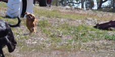 Banksia Park Puppies Playgrounds - 1 of 25 (2)