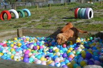 ADULT AGILITY PARK- Banksia Park Puppies - 12 of 117