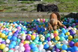 ADULT AGILITY PARK- Banksia Park Puppies - 16 of 117