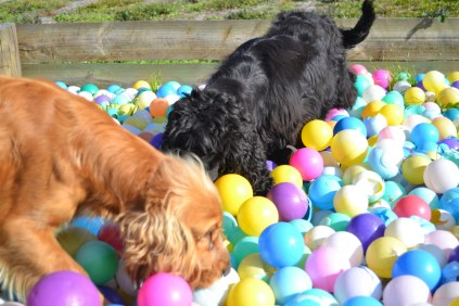 ADULT AGILITY PARK- Banksia Park Puppies - 21 of 117