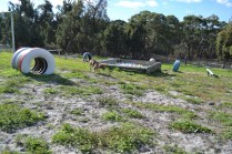 ADULT AGILITY PARK- Banksia Park Puppies - 50 of 117