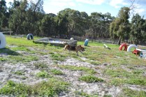 ADULT AGILITY PARK- Banksia Park Puppies - 51 of 117