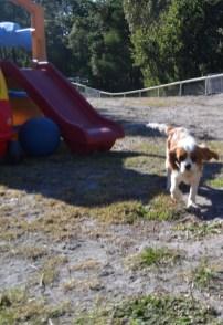Dasha- Banksia Park Puppies - 23 of 24