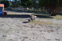 Floss- Banksia Park Puppies - 8 of 22