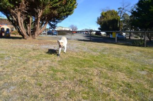 KitKat- Banksia Park Puppies - 15 of 30