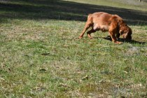 Roza-Cavalier-Banksia Park Puppies - 13 of 47