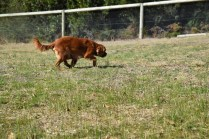 Roza-Cavalier-Banksia Park Puppies - 14 of 47