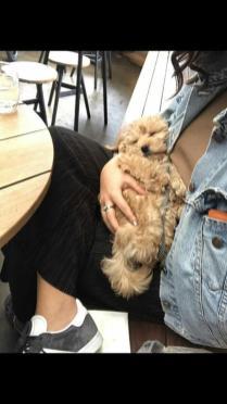 The cute and cuddly Doris as a puppy! @charliefarliexo