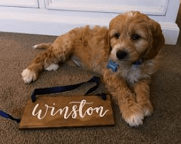 Winston as a little lad! @winstons_world3 DOB 3.8.17