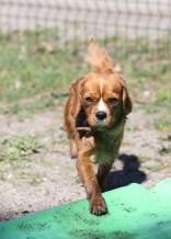PEACHES - bankisa park puppies - 1 of 28 (12)