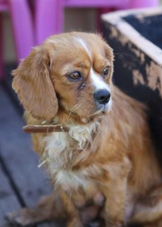 PEACHES - bankisa park puppies - 1 of 28 (27)