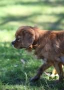 PEACHES - bankisa park puppies - 1 of 28 (4)