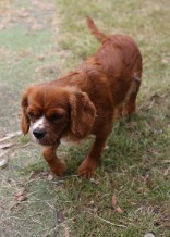 JOY - Bankisa park puppies - 1 of 35 (16)
