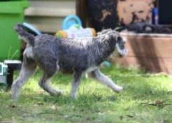 FLEUR - banksia park puppies - 1 of 60 (18)