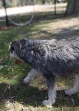 FLEUR - banksia park puppies - 1 of 60 (22)