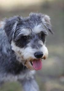 FLEUR - banksia park puppies - 1 of 60 (25)