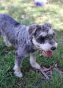 FLEUR - banksia park puppies - 1 of 60 (5)