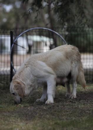 ODIE - Bankisa Park puppies - 1 of 57 (16)