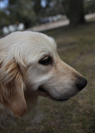 ODIE - Bankisa Park puppies - 1 of 57 (19)
