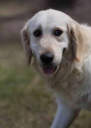 ODIE - Bankisa Park puppies - 1 of 57 (27)