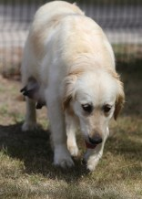 ODIE - Bankisa Park puppies - 1 of 57 (32)