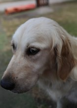 ODIE - Bankisa Park puppies - 1 of 57 (44)