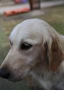 ODIE - Bankisa Park puppies - 1 of 57 (46)