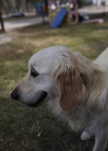 ODIE - Bankisa Park puppies - 1 of 57 (53)