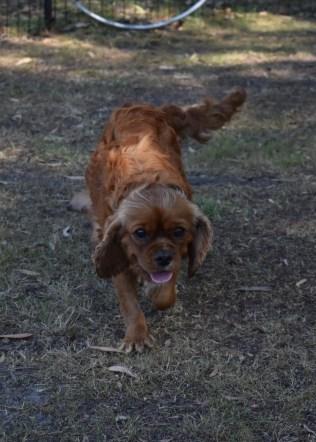 bunny - bankisa park puppies - 1 of 31 (13)