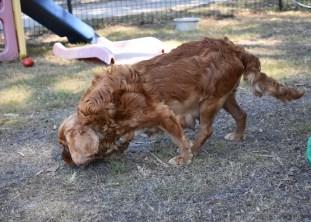 bunny - bankisa park puppies - 1 of 31 (7)