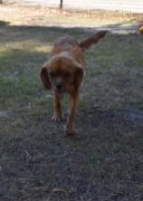 shena - bankisa park puppies - 1 of 36 (20)