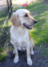 IVY - banskia park puppies - 1 of 50 (12)