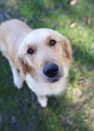 IVY - banskia park puppies - 1 of 50 (29)