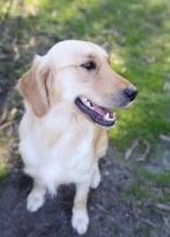 IVY - banskia park puppies - 1 of 50 (32)