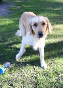 IVY - banskia park puppies - 1 of 50 (36)